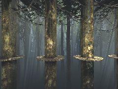 2DDM Treetop