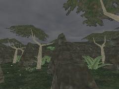 DM-Storm