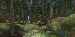DM-ForestDream